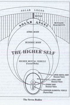 Now there are beings whose lowest member is the etheric body; they too are sevenfold, having an eighth member, higher than spirit-man. We begin to enumerate thus: etheric body, astral body, and so forth, finishing with a member above our spirit-man (Atma). There are other beings whose lowest member is the astral body; above spirit-man they have an eighth and yet a ninth member. Again there are beings whose lowest member is the 'I,' the ego, and who therefore have not a physical nor an ...