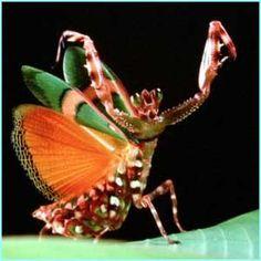 animales raros yo creo que es una mezcla    entre mantis y mariposa
