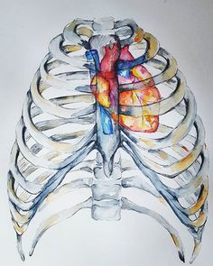 Hearts are wild creatures; thats why our ribs are cages. . . . #cage #free #skeleton #ribs #heart #thoracic #medschool #medart #medicalschool #doctor #futuredoctor #anatomy #anatomyart #medicalillustration #watercolour #art #painting #etsy #almostanatomical