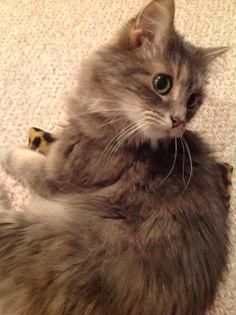 Leopard Cat Pillow Kick Stick Pot Stick Organic by KittyCrackHouse, $5.00