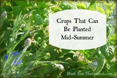 Crops that can be planted mid summer