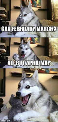 Everybody loves Pun Husky!blackdogrunsd - Funny Duck - Funny Duck meme - - Everybody loves Pun Husky!blackdogrunsd The post Everybody loves Pun Husky!blackdogrunsd appeared first on Gag Dad. Dog Jokes, Puns Jokes, Funny Animal Jokes, Corny Jokes, Really Funny Memes, Stupid Funny Memes, Funny Animal Pictures, Funny Relatable Memes, Funny Animals