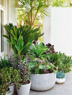 Drought Tolerant Landscape & Path Ideas - Landscape design with potted plants . - Drought Tolerant Landscape & Path Ideas – Landscape design with potted plants – Secret Gardens - Patio Plants, Outdoor Plants, Outdoor Gardens, Deck Plants Ideas, Plants On Balcony, Potted Trees Patio, Jar Plants, Small Gardens, Container Gardening
