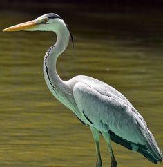 can you name this bird?