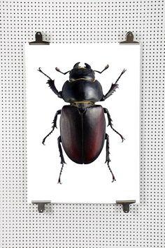 38ee5a5226cd 73 best Indretning - køb og inspo images on Pinterest