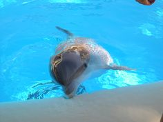 #cute #photooftheday #nature #animallovers #dolphins