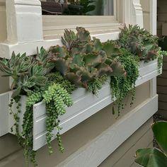 botanik. typical windowbox planter