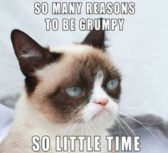 grumpy Grumpy cat!!