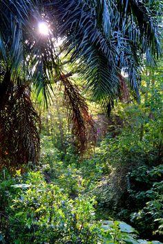 Mountain Gorilla, Rare Birds, East Africa, Uganda, Travel Photos, Travel Inspiration, Waterfall, National Parks, Wildlife