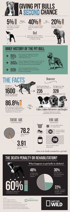 what you dont know about pit bulls