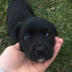 looks more like a black otter.