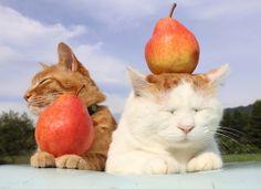 レッド・バートレット   のせ猫オフィシャルブログ Powered by Ameba