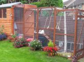 Best Quality Cat Enclosures And Cat Tunnels Ideas 65