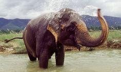 Elephants | chitwan nepal elephants