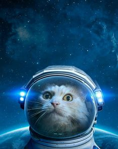 Ground control to Major Tom Cat.