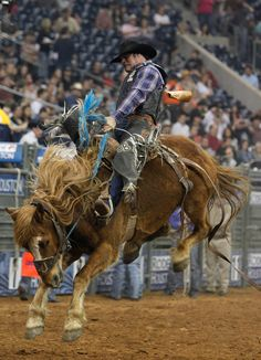 Houston Livestock Show & Rodeo 2012. This is crazy! I want to go back next year!