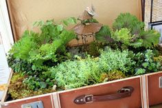 Fairy garden in a suitcase