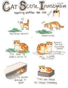 Laine's Art Blog  CSI - Cat Scene Investigations