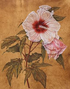 Contemporary Botanical Art - Susan Frei Nathan Fine Works on Paper - ESTHER KLAHNEHibiscus, 2012 Watercolor on fustic dyed vellum 14 x 11 inches