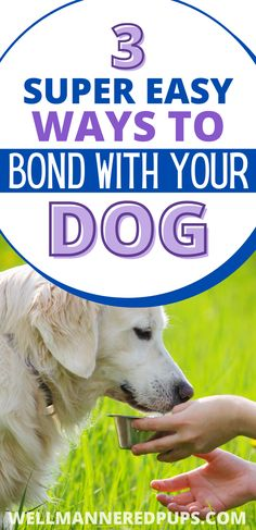Strengthening the bond between you and your dog is so important for dog owners! Here are 3 super easy ways to bond with your dog or puppy. #doglove #dogmom #dogtips Support Dog, Best Bond, Third Way, Best Relationship, Dog Owners, Dog Mom, Super Easy, Puppies, Dogs
