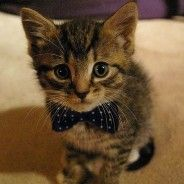 Having a crap day? Well, here's a picture of a kitten in a bow tie. Problem solved.