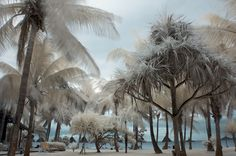 infrared photography...