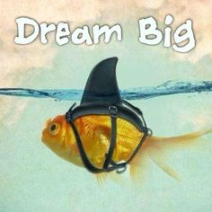 Dream Big...