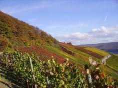 Mittelrhein - Eine Präsentation des deutschen Weinanbaugebiets (2013) Vineyard, Mountains, Places, Nature, Travel, Inspiration, Outdoor, Tourism, Biblical Inspiration
