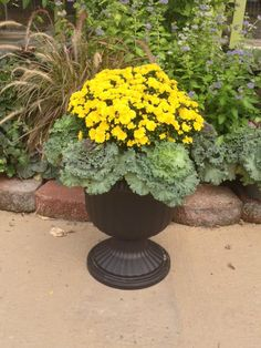 Planting a versatile Fall Planter with Ornamental Kale adding a Yellow Mum