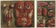 anatomy art - Google 搜尋
