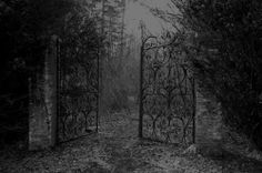 ☾ Midnight Dreams ☽ dreamy dramatic black and white photography - forest
