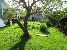 . Stepping Stones, My House, Garden, Outdoor Decor, Plants, Life, Home Decor, Stair Risers, Garten