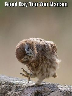 60 Cute Owl Pictures – Some Interesting Pictures For You To Enjoy - Animals Animals And Pets, Baby Animals, Funny Animals, Cute Animals, Funny Owls, Wild Animals, Beautiful Owl, Animals Beautiful, Cute Animal Photos