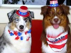 fourth of july puppy pictures
