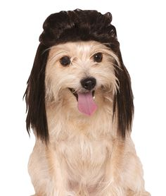 Rubies Costume Company Mullet Pet Wig -- You can find more details by visiting the image link. (This is an Amazon affiliate link)