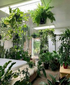 Small Backyard Gardens, Indoor Garden, Indoor Plants, Hanging Plants, Large Plants, Green Plants, Green Apartment, Home Greenhouse, Green Rooms