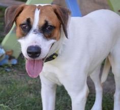 Diamond Adoptable dog of the week #pawpromise