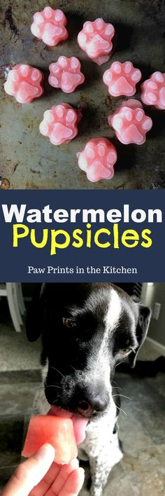 These watermelon pupsicles are a cheap but healthy homemade dog treat. My dog absolutely loved them! - Paw Prints in the Kitchen