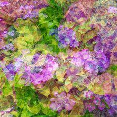 Melancholy of hydrangea #001