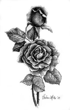 252 best drawing roses images on pinterest rose drawings drawing