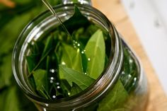 A recipe for making your own bay leaf oil that is great for use in the kitchen and for herbal medicinal purposes