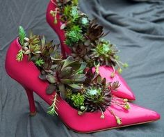 Succulent Garden Ideas -  a great way to use those glorious shoes I can no longer wear!