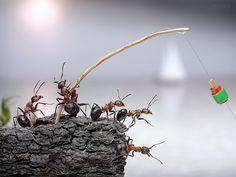 Andrey Pavlov : Ant Photography