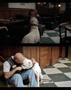 When Tig & Happy fall in love with Bonnie the pitbull