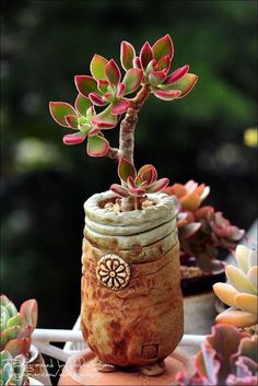 Succulents In Containers, Cacti And Succulents, Planting Succulents, Cactus Plants, Succulent Bonsai, Succulent Care, Chenille Plant, Mini Plantas, Mini Vasos