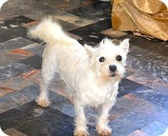 Dogs for adoption, Terrier mix and Terriers on Pinterest