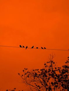 What do you think these birds are chirping about?