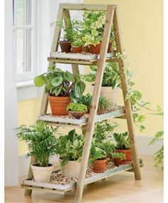 Herb ladder.
