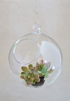 at . Crafted in clear glass, this charming hanging terrarium is perfect for displaying the plant of your choice in any room in the house. Plant not circumference, diameter of opening Hanging Terrarium, Garden Terrarium, Terrariums, Vintage Home Offices, Modern Vintage Homes, Jar Of Dirt, Victory Garden, Bathroom Plants, Green Life