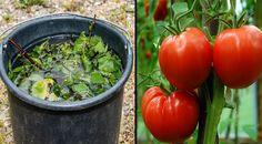 Vegetables, Food, Compost, Essen, Vegetable Recipes, Meals, Yemek, Veggies, Eten